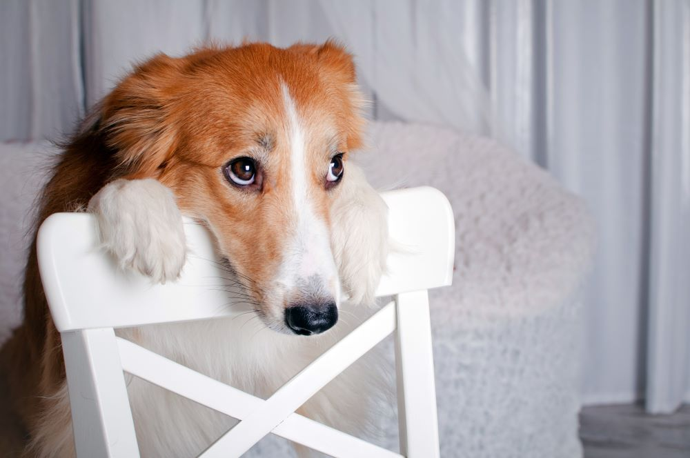 calming dog during removals